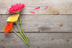 Three colorful gerbera flowers Royalty Free Stock Images