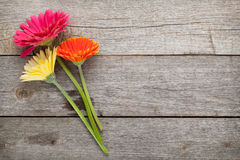 Three colorful gerbera flowers Royalty Free Stock Photo
