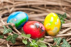Three Easter eggs in a nest Royalty Free Stock Photo