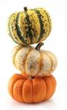 Three colorful pumpkins. Pumpkin three orange halloween thanksgiving harvest isolated Stock Photography