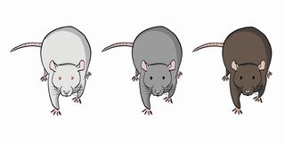 Three colorful rats on white background. Set of different rats stock illustration