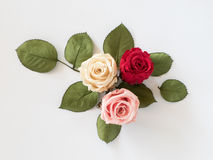 Three colorful roses on white background Royalty Free Stock Photography