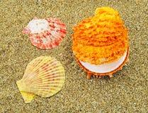 Three colorful seashells Stock Photos