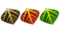 Of three colors leaves. Stock Images