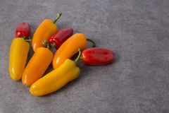 Three colors mini bell pepper royalty free stock images