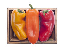 Three Colors of Vibrant Peppers Stock Image