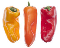 Three Colors of Vibrant Peppers Stock Photography