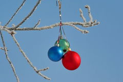 Three colour balls on a branch Stock Photography