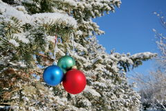 Three colour balls on a fir-trees branch Stock Photo