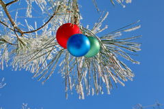 Three colour balls on a fur-tree Stock Photos