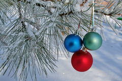 Three colour balls on a pine branch Stock Image