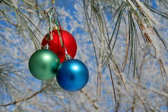Three colour balls on a pines branch Royalty Free Stock Photos