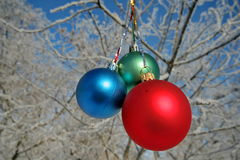 Three colour balls on a tree Stock Photography