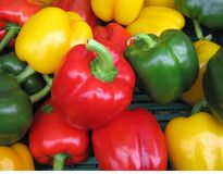 Three colours on pepper Royalty Free Stock Photo