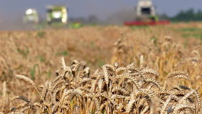 Three of the combine to harvest wheat stock footage