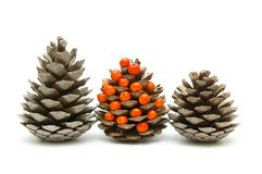 Three cones and ashberry Stock Photo
