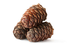 Three cones of Siberian cedar (pine) Stock Image