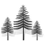Three coniferous tree with transparent shadow. Black silhouette.Ecological symbol Royalty Free Stock Images