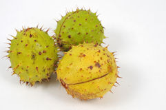 Three conkers, sign of a fall. Image of a three chestnuts isolated stock photo