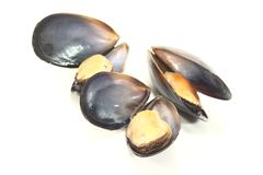 Three cooked Mussels Royalty Free Stock Image