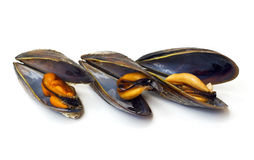 Three cooked mussels Stock Photos