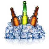 Three cooling beer bottles Stock Photo