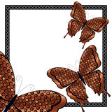 Three Copper and Black Butterflies Royalty Free Stock Image