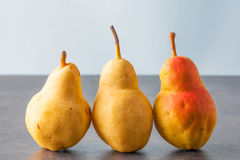Three corella pears Stock Images