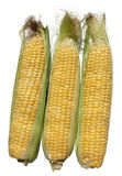 Three corn Stock Photos