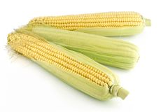 Three corn cob Royalty Free Stock Photos