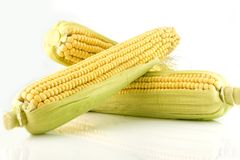 Three corn cob Stock Photography