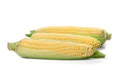 Three corn cob Stock Photo