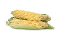 Three corn cob Royalty Free Stock Photo