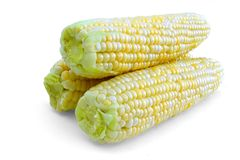 Three Corn Cobs Stock Images