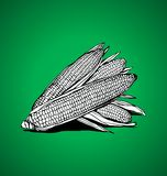 Three corn. On a green background Royalty Free Stock Image