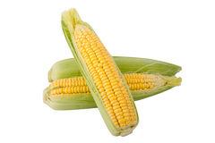 Three corn  on a white background Stock Photography