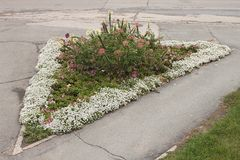 A three-cornered flower-bed with white, pink and purple flowers in the street of Novosibirsk.  Stock Photos