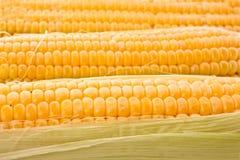 Three corns Stock Photo