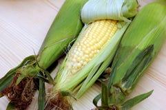 Three corns in cob Stock Images