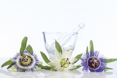 Three coulored passion flower with mortar Stock Photos