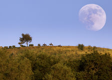 Three cowbows riding horses at dusk. With the moon at background Stock Images