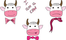 Three cows with a different mood Royalty Free Stock Photo