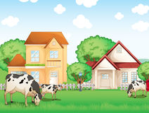 Three cows eating in front of the neighborhood Stock Photos