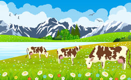 Three Cows In A Landscape And Farm. Royalty Free Stock Photography