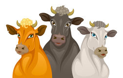 Three cows Royalty Free Stock Images