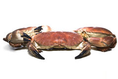 Three crabs Royalty Free Stock Images
