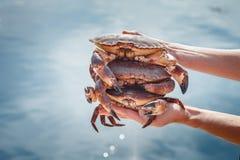 Three crabs Royalty Free Stock Photos