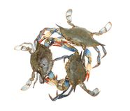 Three crabs Stock Photos