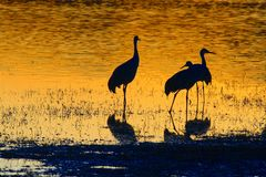 Three cranes at sunset Royalty Free Stock Image