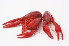 Three Crayfish Stock Image